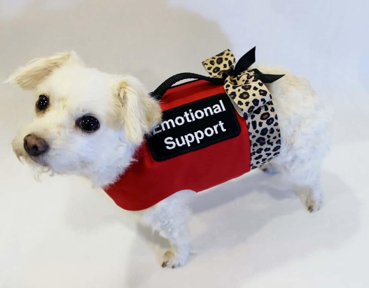 Southwest emotional support animal
