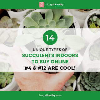14 Unique Types of Succulents Indoors To Buy Online (#4 & #12 are Cool!)