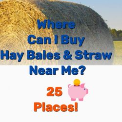 Where Can I Buy Hay Bales and Straw Near Me? 25 Places!