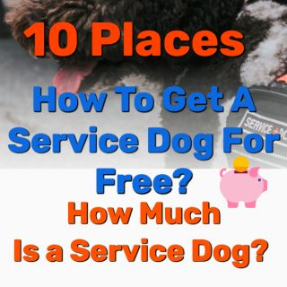 How To Get A Service Dog For Free? 10 PLACES! How Much Is a Service Dog?