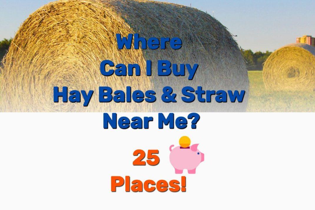 Buy hay bales straw near me - Frugal Reality