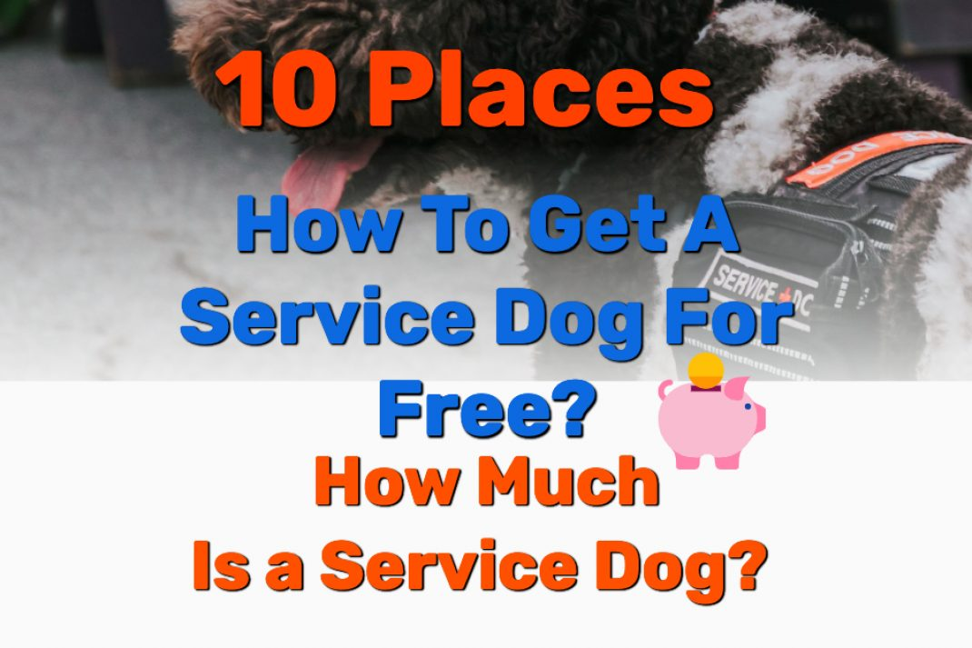 How to get a service dog - Frugal Reality